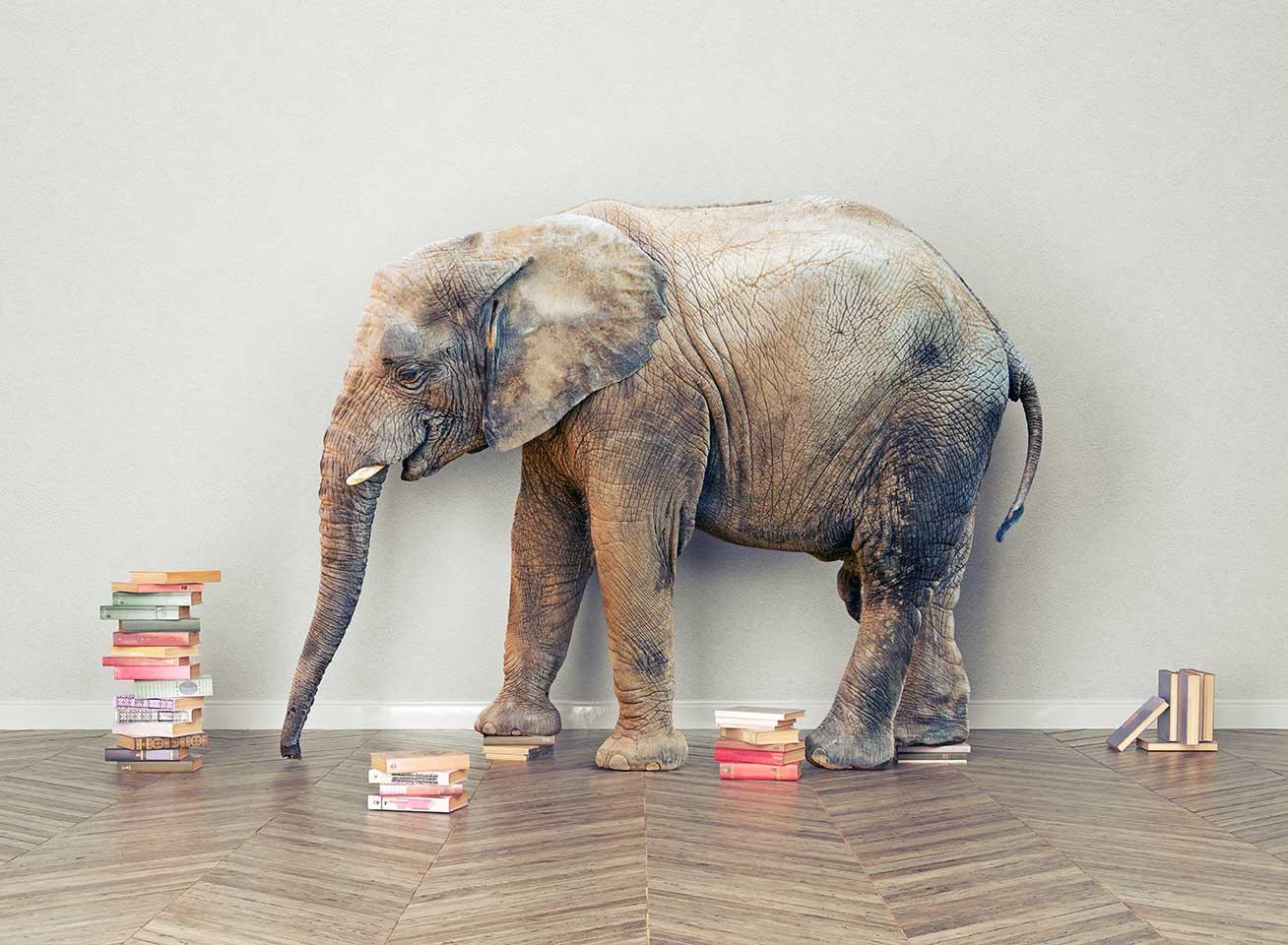 Elefant mit Büchern