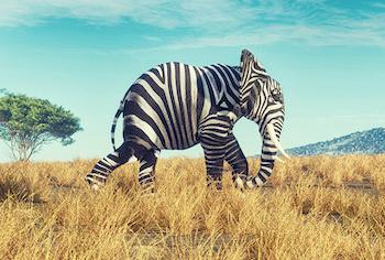 Zebra-Elefant