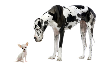 Großer und kleiner Hund