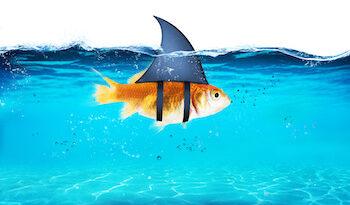 HaiGoldfisch